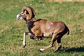 WLD 15 WF0005 01