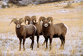 WLD 15 DB0002 01