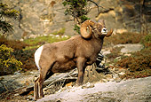 WLD 15 LS0002 01