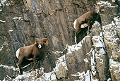WLD 15 LS0003 01