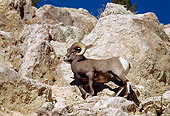 WLD 15 RF0006 01
