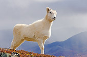 WLD 15 SK0003 01