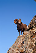 WLD 15 TL0003 01