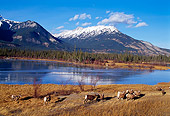 WLD 15 TL0006 01