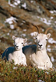 WLD 15 TL0008 01