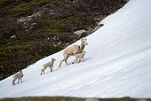 WLD 15 TL0012 01