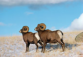 WLD 15 TL0015 01