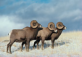 WLD 15 TL0016 01