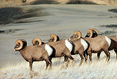 WLD 15 TL0017 01