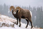 WLD 15 TL0018 01