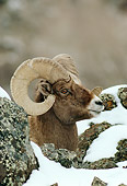 WLD 15 TL0020 01