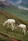 WLD 15 TL0022 01