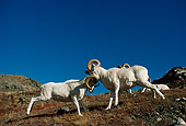 WLD 15 TL0025 01