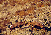 WLD 15 TL0026 01
