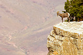 WLD 15 TL0027 01