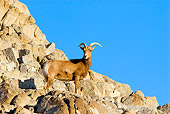 WLD 15 TL0028 01