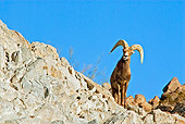 WLD 15 TL0030 01