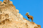 WLD 15 TL0031 01