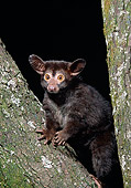WLD 17 MC0001 01