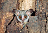 WLD 17 MH0001 01