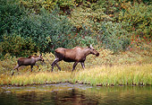 WLD 20 BA0002 01