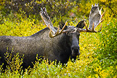 WLD 20 MC0004 01