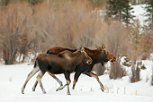 WLD 20 RF0009 01