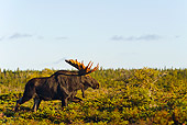 WLD 20 TK0004 01