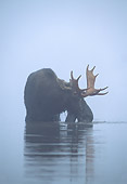 WLD 20 WF0005 01