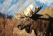 WLD 20 DB0003 01