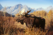 WLD 20 DB0004 01