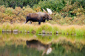 WLD 20 SK0001 01