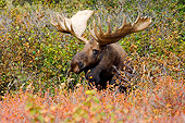 WLD 20 SK0004 01