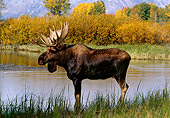 WLD 20 TL0003 01