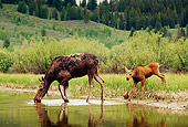 WLD 20 TL0005 01
