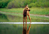 WLD 20 TL0006 01