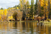 WLD 20 TL0009 01