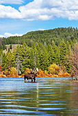 WLD 20 TL0011 01