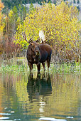 WLD 20 TL0015 01