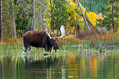 WLD 20 TL0016 01