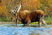 WLD 20 TL0017 01
