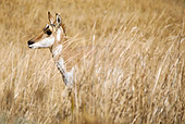 WLD 21 MC0001 01
