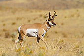 WLD 21 MC0002 01