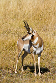 WLD 21 MC0005 01