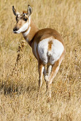 WLD 21 MC0007 01