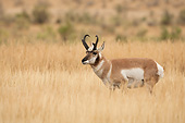 WLD 21 MC0010 01