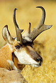 WLD 21 TL0004 01