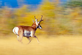 WLD 21 TL0005 01