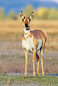 WLD 21 TL0007 01