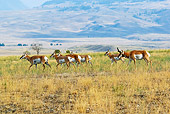 WLD 21 TL0008 01